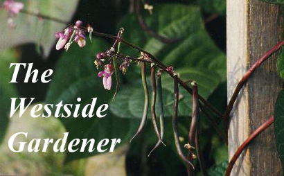 The Westside Gardener - apple blossoms logo